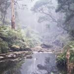 Gellibrand River, Dando's, Great Otway National Park
