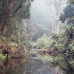 Early morning mist over the Gellibrand River, Dando's, Great Otway National Park